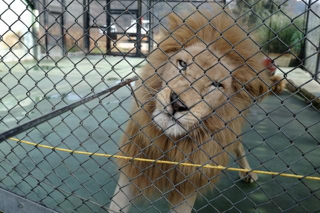 サファリパークの動物を単焦点レンズで撮ってみた