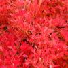 紅葉の写真 ホワイトバランスの設定