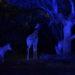 夜の動物園での撮影